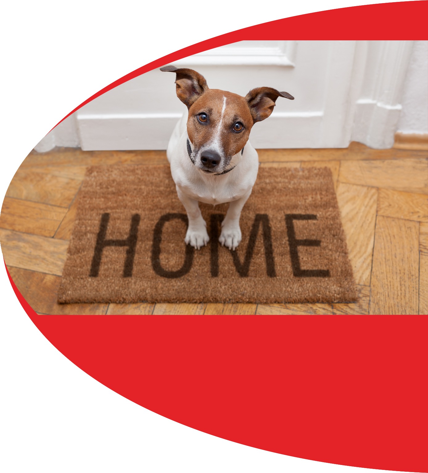Dog with Welcome Mat
